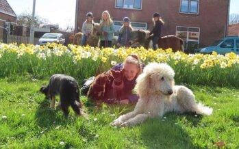 Crowdfunding voor getroffen dierenopvang sunflower ranche Arnhem