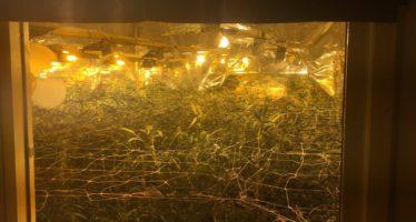 Een kelder vol wietplanten en hennepstekken opgerold