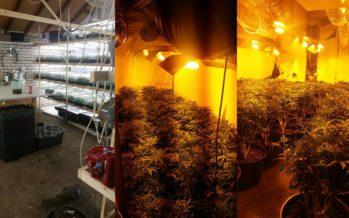 Arnhemmers aangehouden in woning met 15.000 hennepstekken en 400 moederplanten leeggehaald