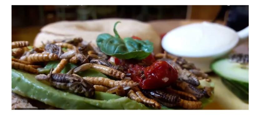 Arnhemse koffiezaak verkoopt een broodje met wormen en krekels