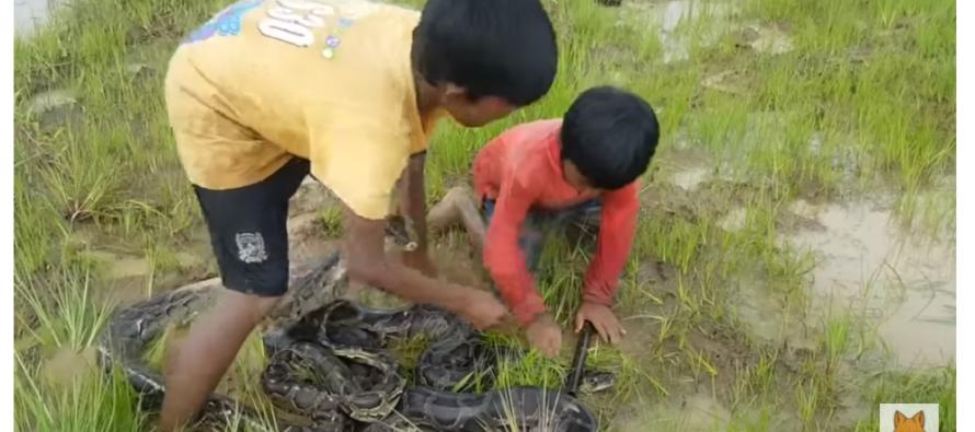 Kleine kinderen spelen doodgewoon met gevaarlijke slangen in een weiland