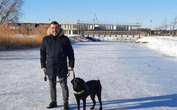 Menzis weigert vergoeding training geleidehond, Arnhemmer nu in de problemen
