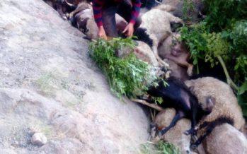 Kudde schapen dood na sprong van 80 meter